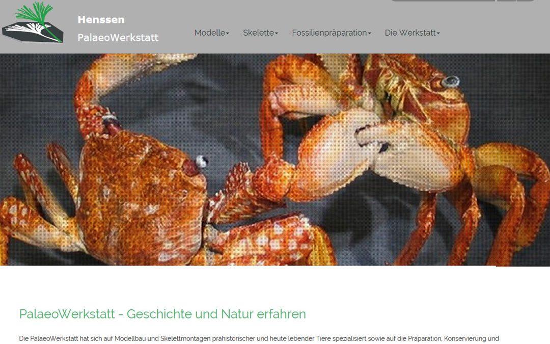 Projekt live: Henssen PalaeoWerkstatt